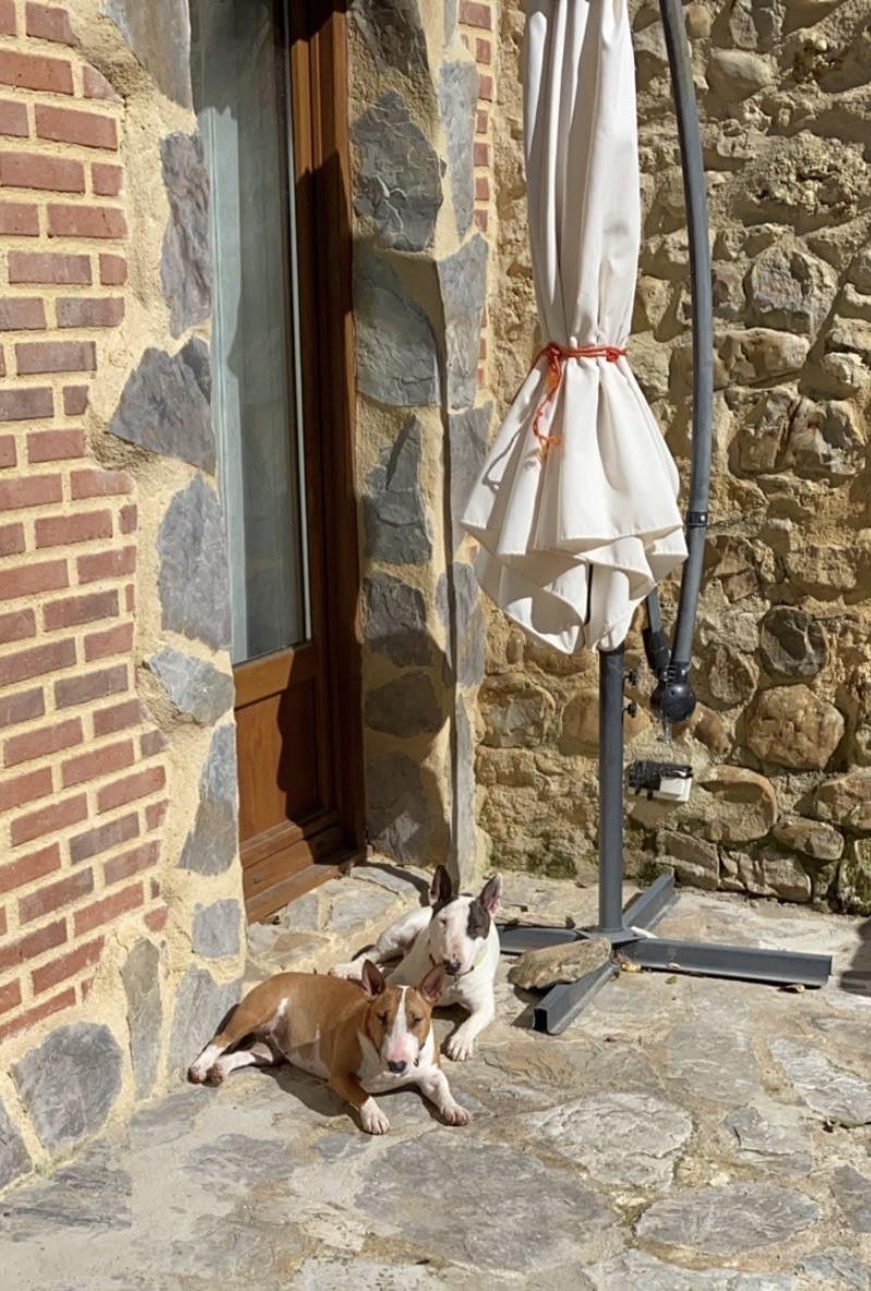 Carácter del bull terrier miniatura hembra y el macho