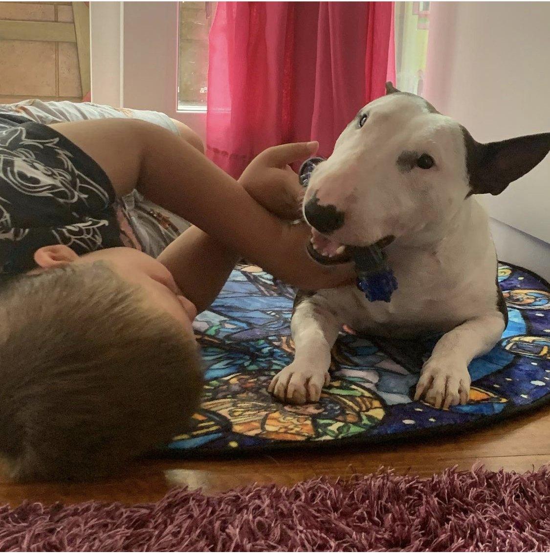 Cuantas horas debe dormir un bull terrier miniatura